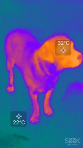 Thermal dog